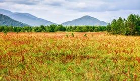 Красные цветки и горы Стоковая Фотография RF