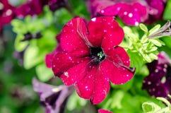 Красные цветки и зеленая ель стоковое фото rf