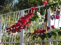 Красные цветки и зеленые растения стоковые изображения