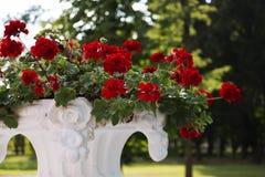 Красные цветки и зеленая предпосылка Стоковое Фото