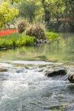 Красные цветки и поток тюльпанов Стоковые Фото