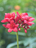 Красные цветки и Boken стоковые изображения rf