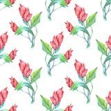 Красные цветки карандашами Стоковое Фото