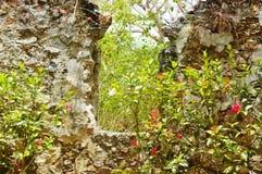 Красные цветки на античных руинах Стоковые Фото