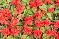 Красные цветки на ботаническом саде стоковые изображения rf