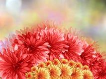 Красные цветки, на красным предпосылке запачканной пинком Стоковое Изображение RF