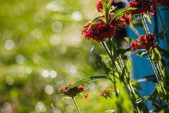 Красные цветки на предпосылке запачканной зеленым цветом Стоковое Изображение RF