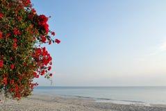 Красные цветки на пляже с белым песком. стоковые фото