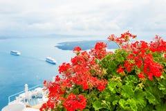 Красные цветки на террасе с видом на море Стоковая Фотография RF