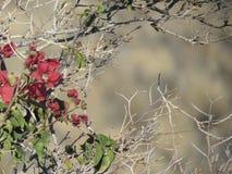 Красные цветки с предпосылкой bokeh Стоковые Изображения