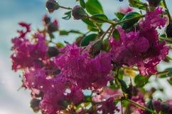 Красные цветки с утром росы весной Стоковые Фото