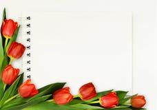 Красные цветки тюльпана и блокнот Стоковые Фотографии RF