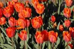 Красные цветки стоковое изображение rf
