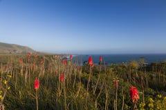 Красные цветки Стоковое Изображение