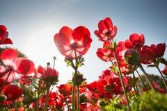 красные цветки Стоковое Фото