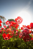 Красные цветки Стоковые Изображения