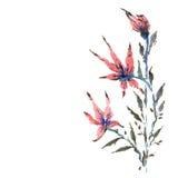 Красные цветки Стоковые Фото