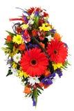 Красные цветки Gerbera. Стоковое Фото