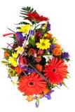 Красные цветки Gerbera. Стоковые Изображения