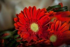 Красные цветы вверх закрывают Стоковые Фотографии RF