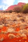 Красные цветы Olgas в NT Австралии  Стоковые Фото