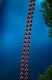 Красные шарики ожерелья bijoux Стоковые Фотографии RF