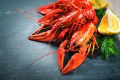 Красные ые crayfish Ракы Стоковая Фотография