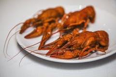 Красные ые crayfish Стоковое Изображение RF