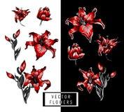 Красные элементы иллюстрации руки лилий Стоковые Изображения RF