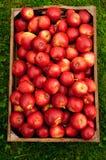 Красные яблоки в коробке стоковые изображения
