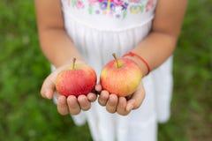 Красные яблоки в руках стоковые фото