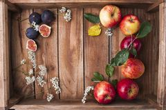 Красные яблоки на деревянной коробке с листьями и цветками Сбор осени плодоовощей Взгляд сверху Открытый космос для текста Стоковое Изображение