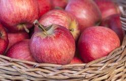Красные яблоки Стоковая Фотография