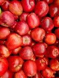 Красные яблоки стоковые изображения rf
