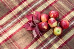 Красные яблоки и листья осени на коричневом взгляд сверху шотландки Стоковые Фотографии RF