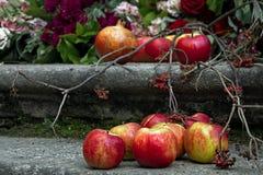 Красные яблоки и rowanberry Стоковое Изображение RF