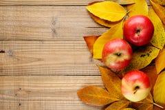 Красные яблоки на листьях осени Стоковое фото RF