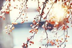 Красные ягоды в bokeh льда и сверкнать праздничном Настроение зимних отдыхов Винтаж стоковые изображения