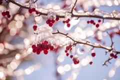 Красные ягоды в bokeh льда и сверкнать праздничном стоковое фото
