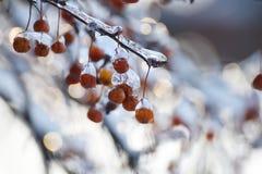 Красные ягоды в bokeh льда и сверкнать праздничном стоковое изображение rf