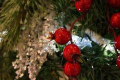 Красные ягоды падуба закрывают вверх на рождественской елке стоковое изображение rf
