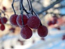 Красные ягоды покрытые с изморозью стоковое фото rf
