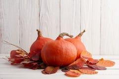 Красные японские тыквы на хеллоуин и благодарение Стоковая Фотография RF