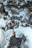 Красные beries на льде Стоковое Изображение RF