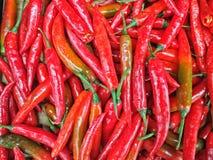 Красные chilis Стоковые Изображения