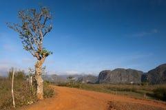 Красные mogotes дороги и кубинца земли, Vinales, Куба Стоковые Изображения