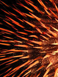 Красные starfish крон--терниев Стоковое Изображение RF