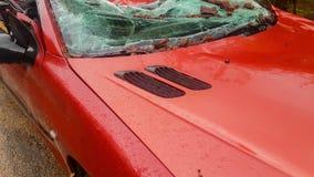 Красный автомобиль разрушенный деревом после сильного шторма сток-видео