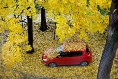 Красный автомобиль среди упаденных листьев Стоковое Фото