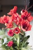 Красный амарулис Стоковое Фото